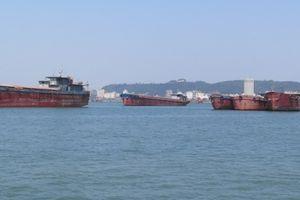 Hàng loạt tàu thuyền trốn tránh làm thủ tục rời cảng Dung Quất