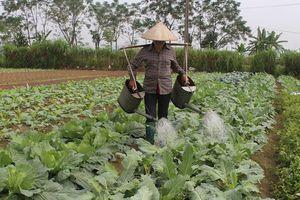 Nông dân được vay 200 triệu đồng không cần tài sản đảm bảo