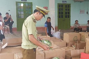 Thu giữ gần 600kg bánh kẹo Trung Quốc nhập lậu