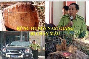 Rừng ở huyện Nam Giang bị 'chảy máu': Xử lý hàng loạt cán bộ liên quan