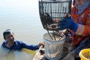 Miền Tây mùa lũ, đặt lọp cua, lưới cá linh, câu ếch đồng 'hốt bạc'