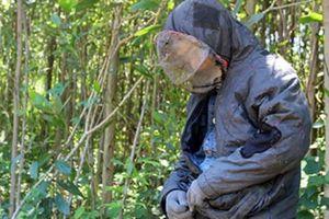 Quảng Nam: Xuyên rừng thiêng nước độc săn loài 'ong tử thần'