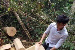 Vụ gỗ lậu ở Mang Yang: Một đối tượng ra trình diện