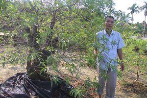 Người có công lan tỏa kinh nghiệm trồng đào cảnh cho đồng bào dân tộc