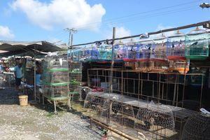 Vì sao khó xử lý chợ chim Thạnh Hóa
