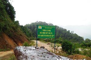 Cấp chứng chỉ cho hơn 1 triệu hécta rừng sản xuất, phòng hộ