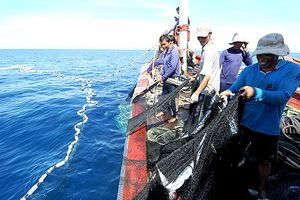 Kiên quyết ngăn chặn tàu cá khai thác trái phép ở vùng biển nước ngoài