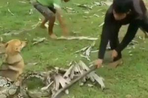 Kinh hãi nhìn 3 bé trai giải cứu chó nhà khỏi rắn khổng lồ