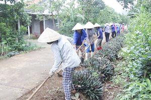 Quảng Trị: Hỗ trợ xây dựng 17 mô hình vườn kiểu mẫu