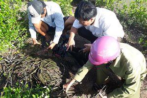 BQL rừng phòng hộ Kiến Vàng làm tốt công tác trồng và bảo vệ rừng