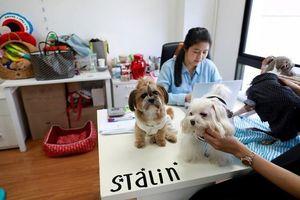 Thái Lan: Cho phép mang thú cưng đến nơi làm việc để giảm stress