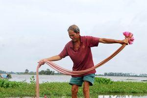 Thu hoạch bông súng, cá linh mùa nước nổi tại Đồng Tháp Mười