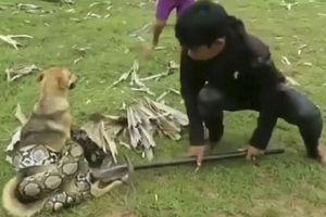 Ba đứa trẻ dũng cảm 'chiến đấu' với trăn lớn để cứu chó cưng