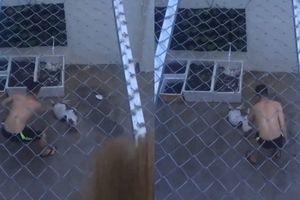 Căm phẫn gã thanh niên dùng roi vụt khiến chú chó nhỏ giãy giụa giữa sân nhà