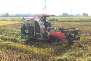 Hiệp Hòa - Bắc Giang: Thực hư thông tin 'bảo kê' máy gặt ở làng Xuân Biều