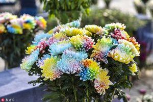 Loài hoa lạ khoe 7 sắc cầu vồng cực hiếm xuất hiện