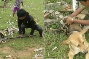 Thót tim ba cậu bé chiến đấu trăn khổng lồ cứu chó cưng
