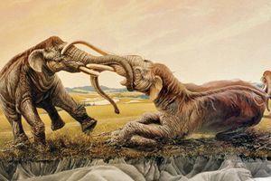 Trận chiến 'kinh hồn' của hai voi ma mút, sừng cắm vào nhau 120 thế kỷ