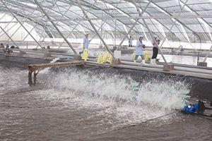'Rào cản' truyền thông trong xuất khẩu thủy sản