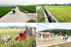 Hiệu quả từ giám sát xây dựng nông thôn mới