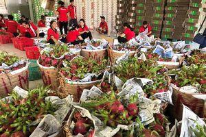 'Đụng hàng' Trung Quốc, thanh long Việt bán rẻ như cho