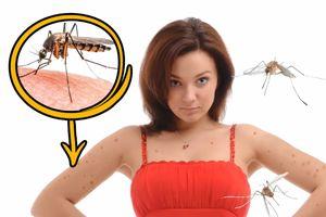 Mẹo đuổi muỗi tự nhiên và hiệu quả