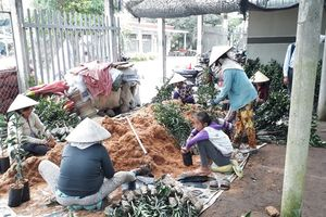 Cận cảnh nghề làm bao bì cây giống tăng thu nhập lúc nông nhàn