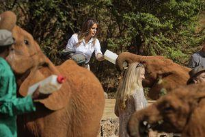 Melania Trump bị voi con húc vào người