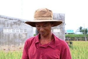 Nông dân Ninh Thuận được mùa nha đam