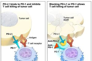 Liệu pháp điều trị ung thư đạt giải Nobel: Đây có phải cứu cánh cho 'bản án tử'?