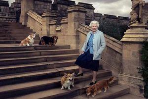 Cuộc sống trong nhung lụa của những chú thú cưng Hoàng gia