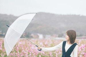 Ngẩn ngơ trước cánh đồng cosmos nở rực ở Nhật Bản