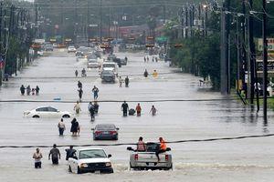 Không thể đứng nhìn thành phố đang chìm