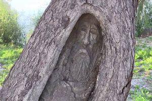 Thực hư chuyện hạt giống trong bụng mọc thành cây, giúp phát hiện xác chết