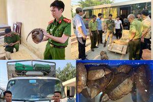 Bắt nhiều cá thể tê tê và rùa không giấy tờ hợp lệ