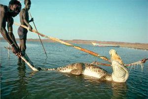 Bí ẩn bộ tộc chuyên bắt cá sấu, hà mã... để ăn