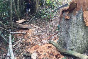 Kỷ luật cách chức đội trưởng đội bảo vệ để rừng bị chặt phá