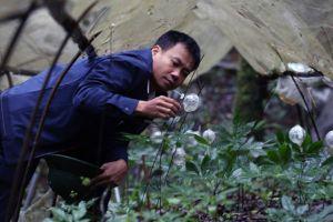 Chuyện li kì chưa từng kể về cuộc giải cứu 'quốc bảo' sâm Ngọc Linh khỏi họa tuyệt chủng