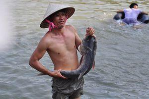 Hàng trăm người dân đổ xô đi 'săn' cá khủng hồ thủy điện Trị An