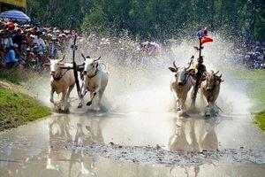 Hội đua bò Bảy Núi năm 2018: Chủ nhân đôi bò 09 đoạt giải vô địch kép