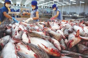 Thủy sản Việt khó vào siêu thị Việt: Rào cản...lậu?