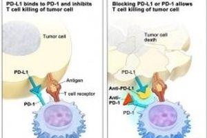 Việt Nam có hướng tiếp cận khác trong miễn dịch điều trị ung thư
