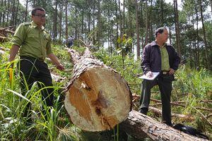 Phó thủ tướng yêu cầu kiểm tra xử lý các vụ phá rừng ở Lâm Đồng