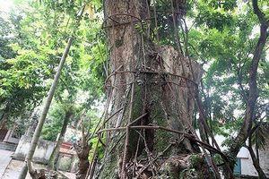 Bản tin 20H: Hà Nội đồng ý cho người dân bán cây sưa đỏ trăm tỷ