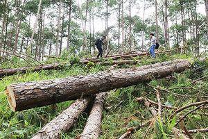 Phó Thủ tướng yêu cầu Lâm Đồng làm rõ các vụ phá rừng