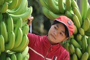 Chung tay xây dựng tiêu chuẩn cho nông sản Việt Nam