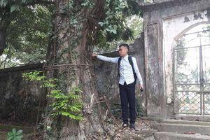 Chuyện ly kỳ về cây sưa được mặc áo giáp, người dân mất ăn mất ngủ thay nhau canh từng được định giá 100 tỉ đồng ở Hà Nội