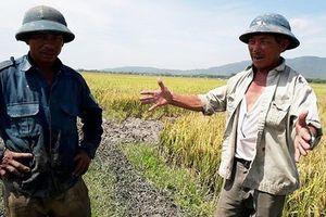Thanh Hóa: Bắt đối tượng bảo kê máy gặt, cướp tài sản của dân