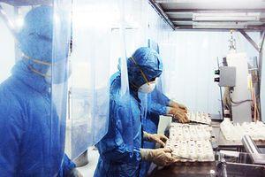 Sản xuất vắc xin từ trứng gà