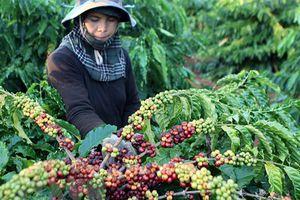 Xây dựng và phát triển thương hiệu nông sản Việt Nam trong bối cảnh hội nhập quốc tế